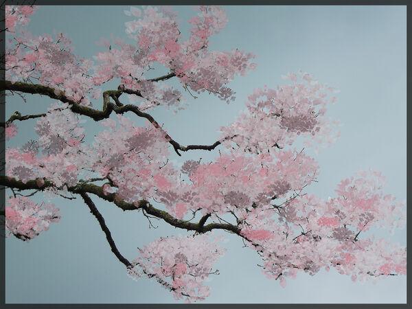 Tree blossom - Lynne Ball