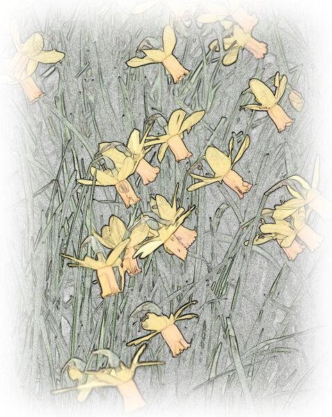 For Wordsworth - Sion Arrowsmith