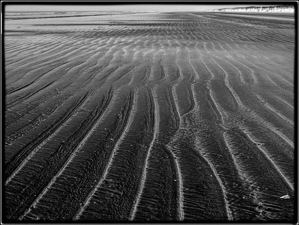 Shoreline - Ian Ledgard