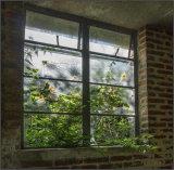 Broken window - Ian Ledgard