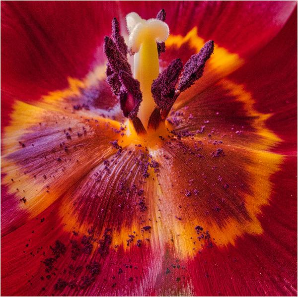 Floral sex - John Hufferdine