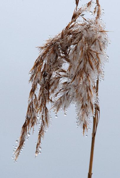 Mist in a seedhead - Sion Arrowsmith