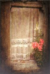Snapdragon window - Ian Ledgard