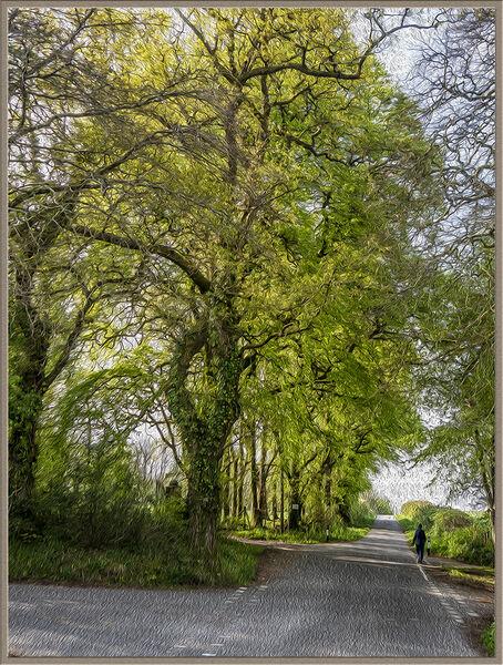 Spring crossroads - Ian Ledgard