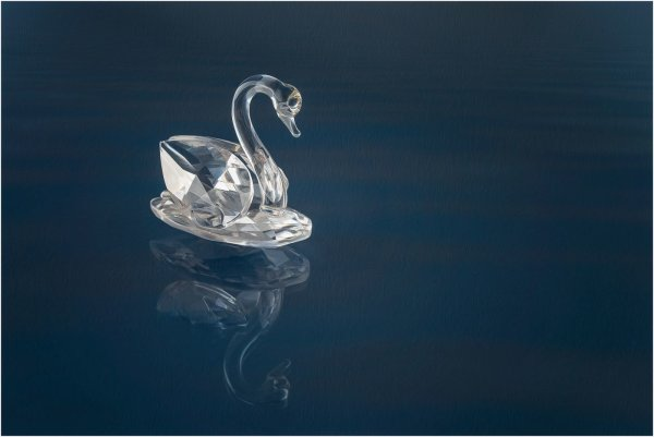 Swan lake - Martin Smith
