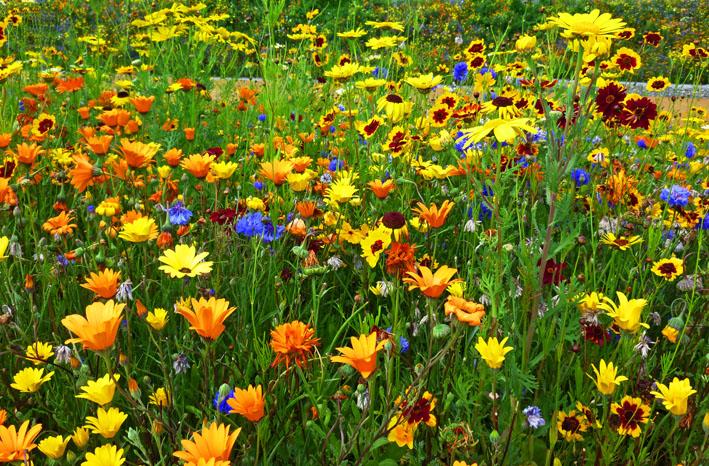 Stunning 2012 flowers