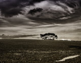 Isolated copse
