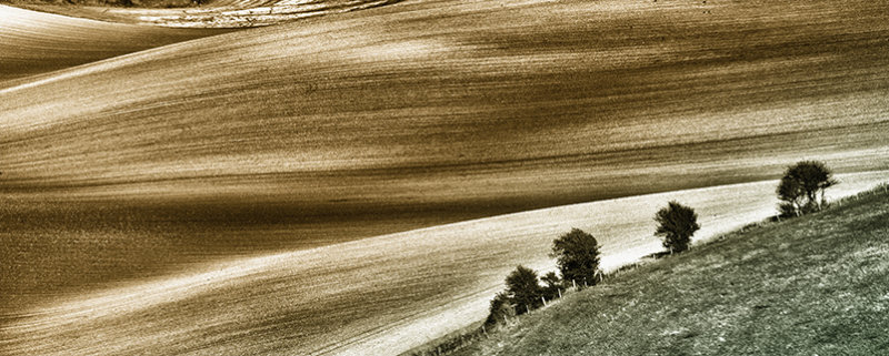 Textures & Curves, South Downs