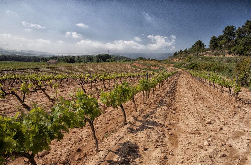 Important vines