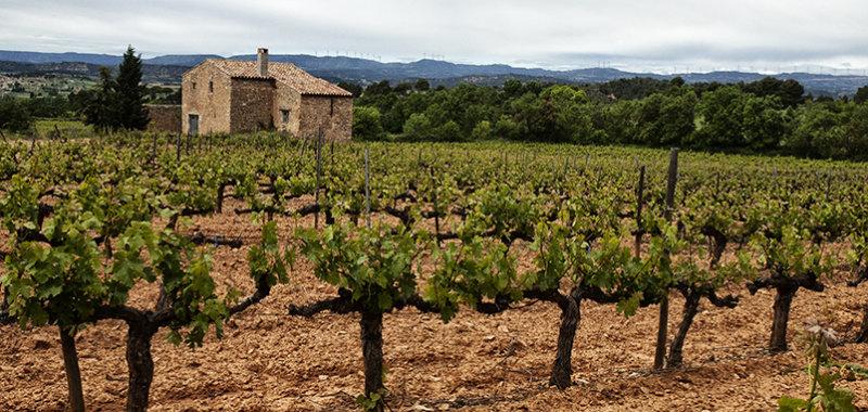 Last vineyards