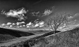 Isolated tree, lonely valley
