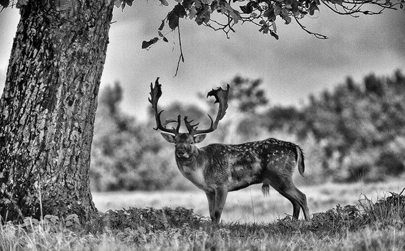 Posing under the Oak