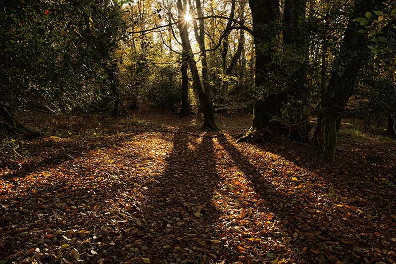 Autumnal sun / shadows