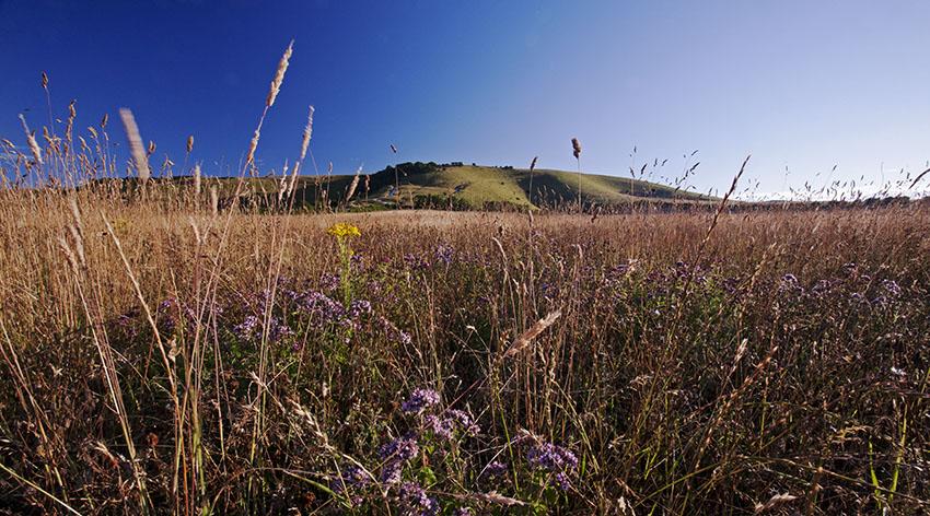 Downland Flora