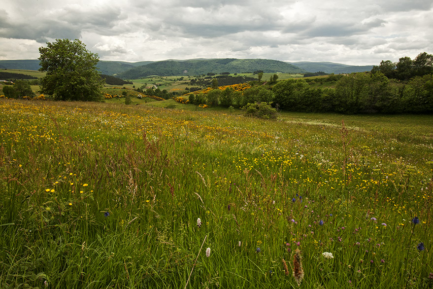 Cevennes meadow