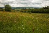 Cevennes meadow