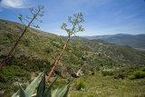 Interesting vegetation