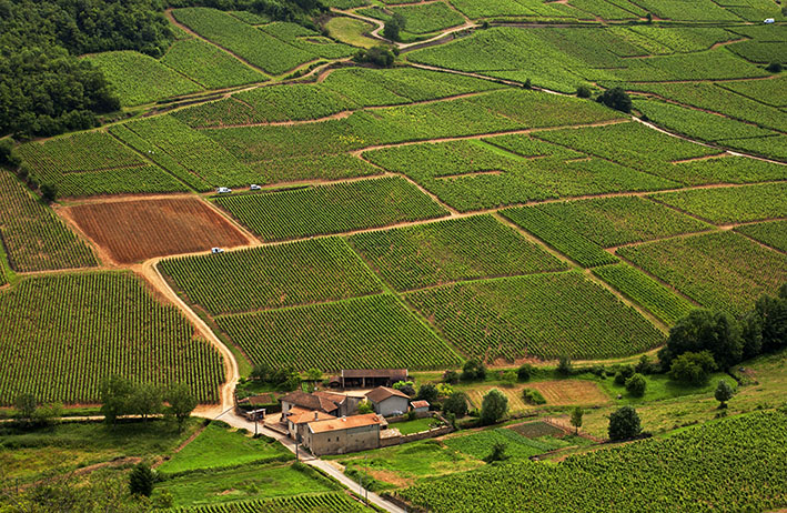 World - famous vineyards