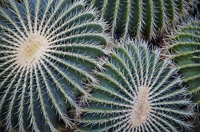 Cactus close up