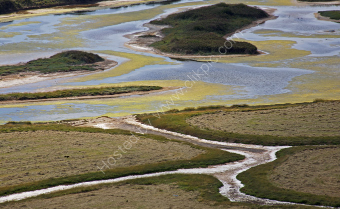 Patterns in the salt marshes