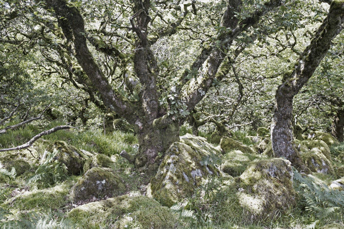 Atmospheric ancient woodland
