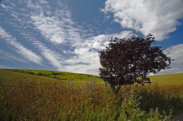 Downland vista