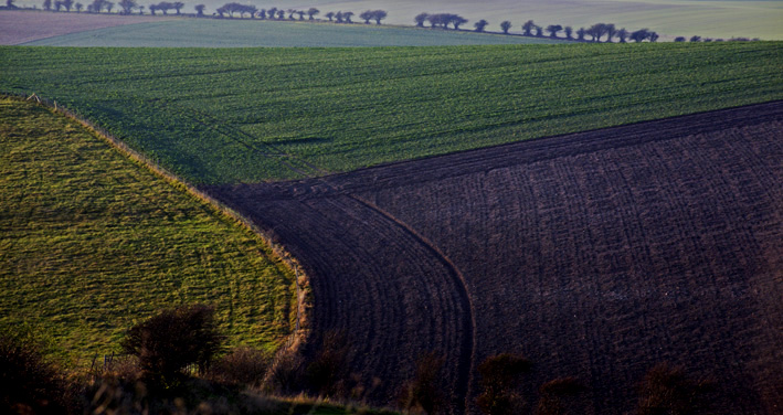 Patterns in the fields