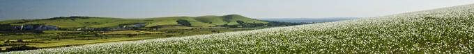 Downland panorama