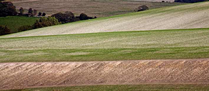Sussex Downland layers
