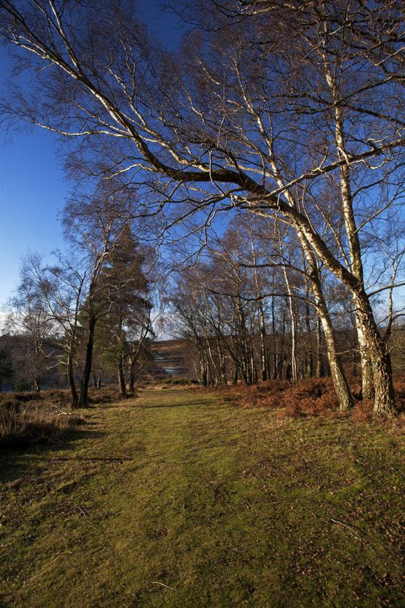 Winter, Ashdown Forest