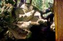 Sequoia Tree Roots