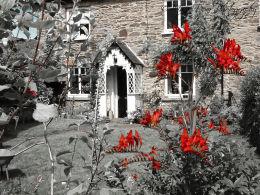 Scarlet flora