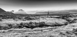 The Dead Tree of Rannoch Moor and Buachaille Etive Mhor