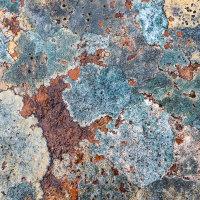 Torridon Lichen Mosaic
