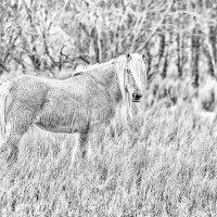 Torridon Horse