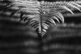 Forest Floor Fern Study #2