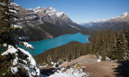Postcard Peyto Lake and Mount Patterson