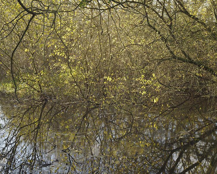 River Colne,  Springwell Lake.
