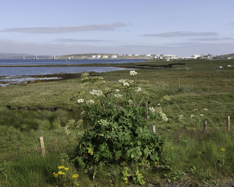 Scatsta, Sullom Voe, Shetland (HU 39827 72890) looking N.
