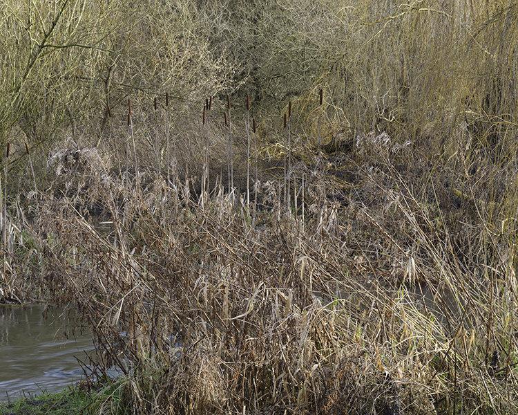 River Gade, Cassiobury Park, Watford