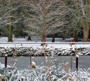A wintry scene in University Parks, Oxford