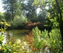 Order No 130: Picturesque planting around the pond, University Parks, Oxford