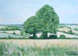 Fields Near Sharlston