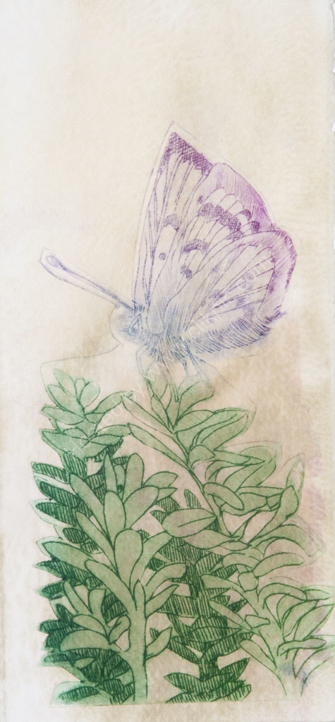 Butterfly. Drypoint print with polysol dye.