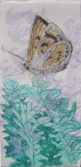 Common Copper Butterfly. Drypoint print.