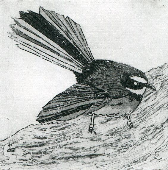 Fantail. Etching