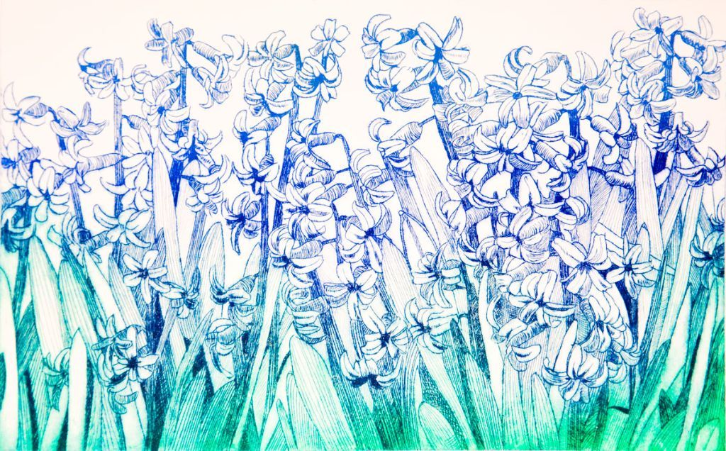Hyacinths. Drypoint plate.