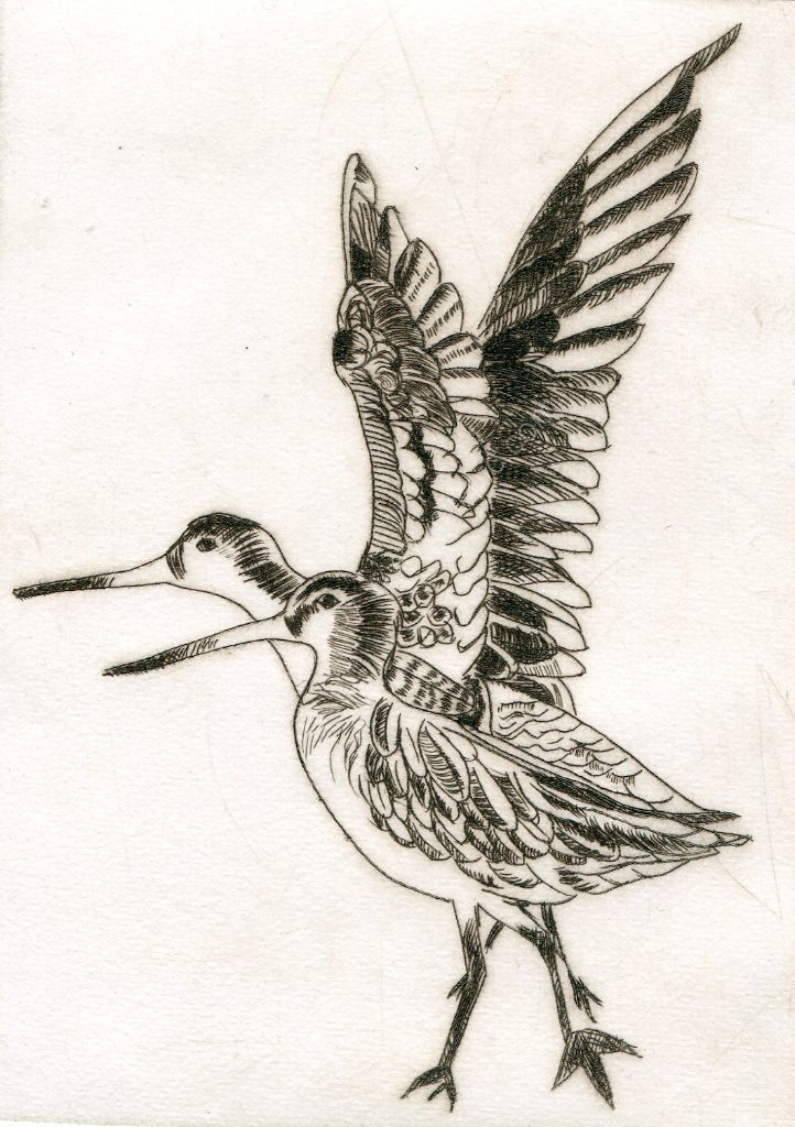 Godwits 2 Wings Up. Drypoint print.