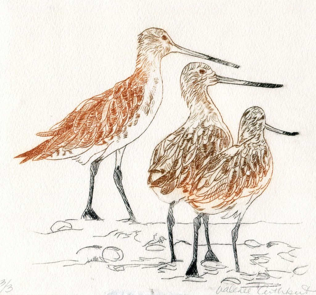 Godwits 3. Drypoint print