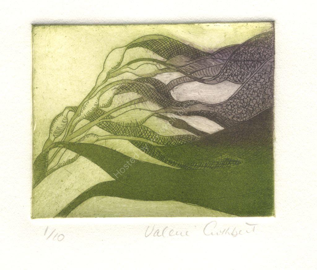 Kelp. Etching